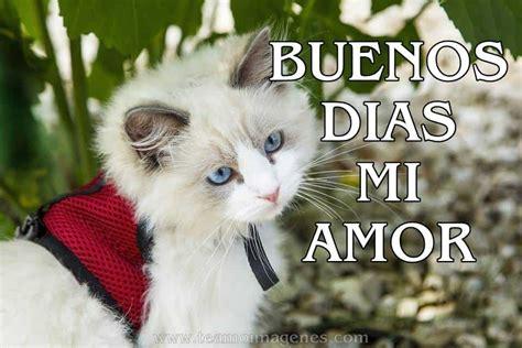 imagenes de buenos dias amor con gatitos 17 im 225 genes de perritos y gatitos para desear buenos d 205 as