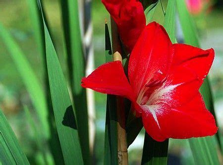 fiori da piantare in aprile fiori da piantare in aprile pagina 6 fotogallery donnaclick