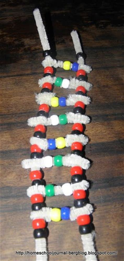 dna model using pipe cleaners and best 25 dna model ideas on dna helix