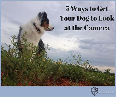 5 ways to get a luxury look for less 5 ways to get your dog to look at the camera the guild