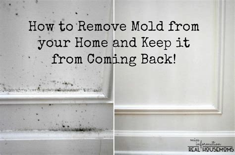 stop mould in bedroom how to stop mold in bedroom 28 images musty odor in a
