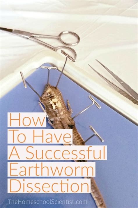 earthworm dissection elementary 5154 best images about homeschool elementary curriculum on homeschool activities