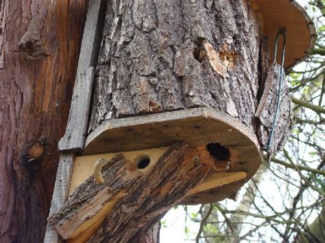 Gestell Für Vogelhaus Selber Bauen by Der Buntspecht Vom Steenmoor