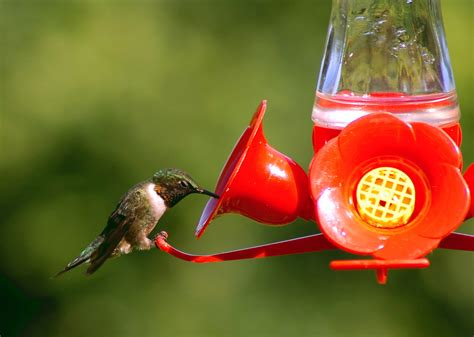 hummingbird feeders guide blain s farm fleet blog