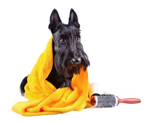 puppy pet grooming paws pet grooming boarding 6223 w 63rd st chicago illinois 60638