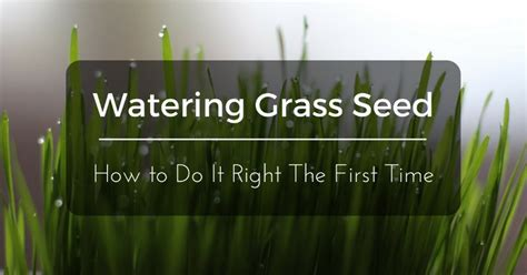 watering grass seed        time