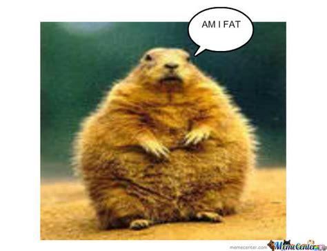 Chipmunk Meme - fat chipmunk by elliecares meme center