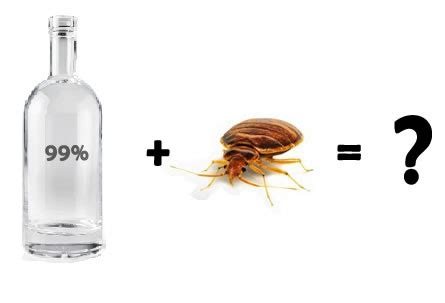 alcohol for bed bugs does alcohol kill bed bugs or is there an easier way