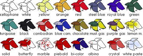 betta colors all about betta fish betta colors