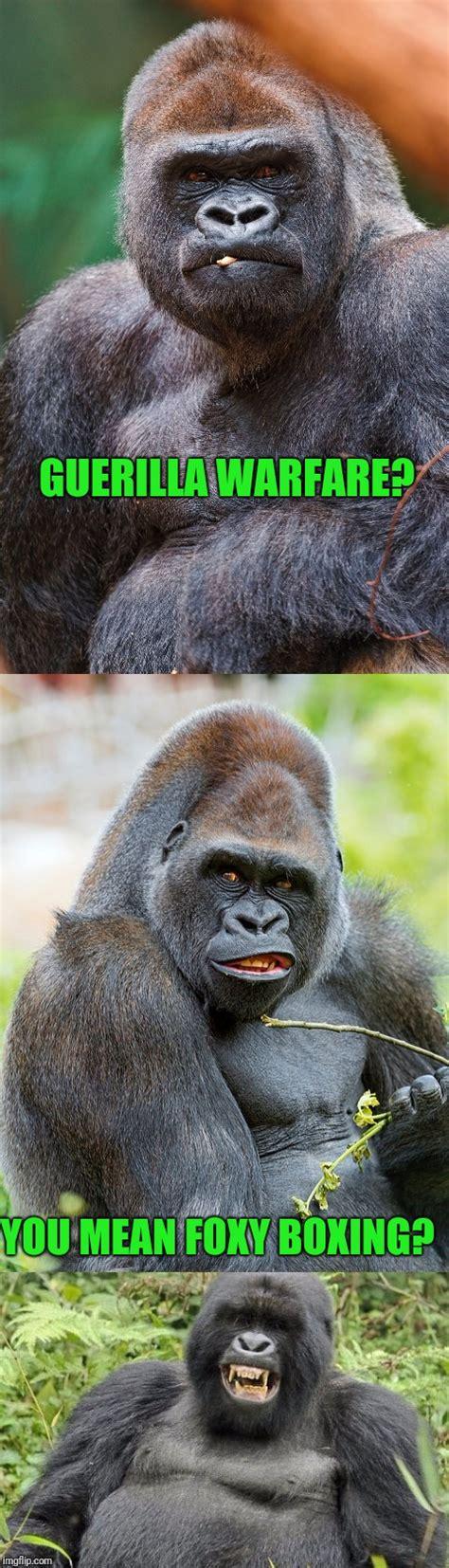 Gorilla Warfare Meme - king of the jungle imgflip