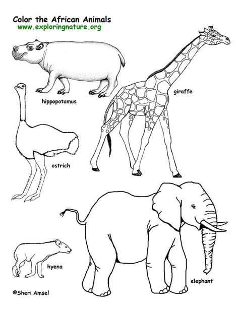 exploring nature coloring pages african animals coloring pages savanna african animals