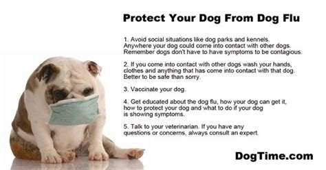 puppy flu the flu epidemic how to protect your dogtime