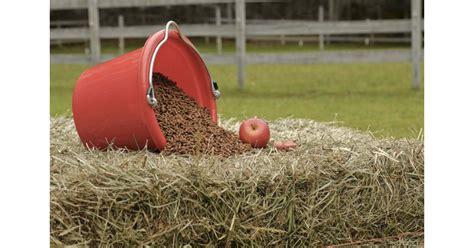 alimentazione cavallo l alimentazione cavallo cosa dargli e cosa evitare
