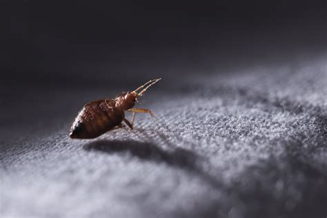 who is responsible for bed bugs landlord or tenant landlord forced to pay tenant 300k for bedbugs infestation