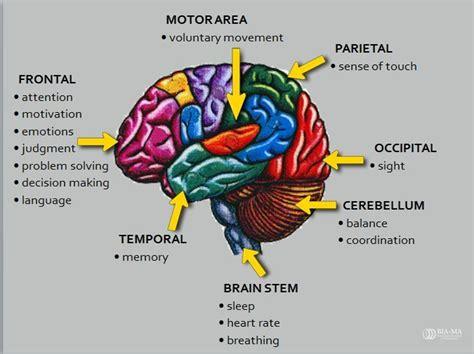 mood swings after head injury 25 best ideas about brain anatomy on pinterest brain