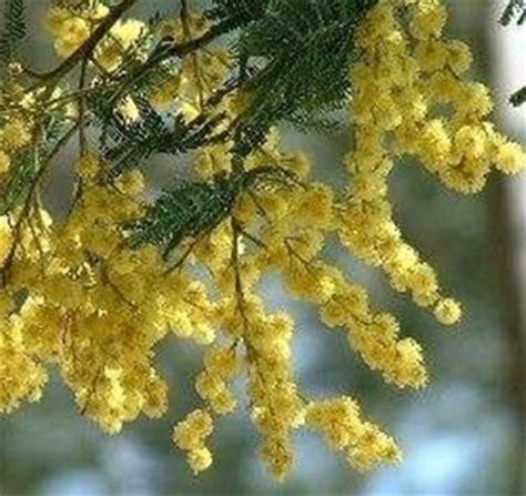 fiori per la festa delle donne fiori festa della donna fiorista fiori da regalare per