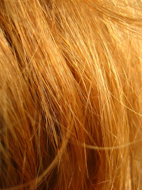 orange pubic hair file redhead close up jpg wikimedia commons