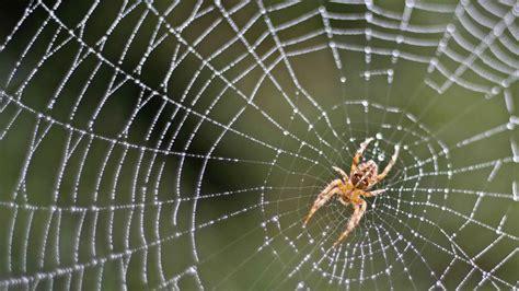 fear  spiders  reasons     friends