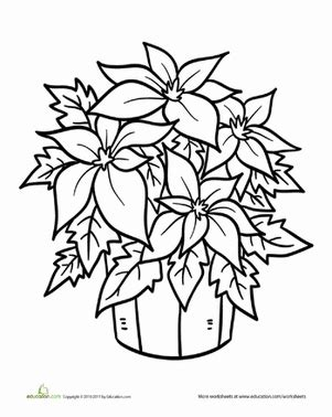 poinsettia leaves coloring pages poinsettia plant coloring page winter christmas