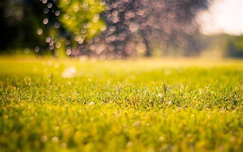 nature meadow grass green morning day bokeh blur macro