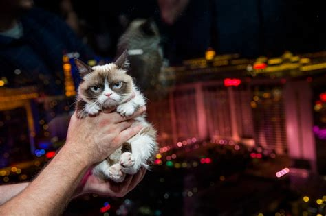 las cat 4 grumpy cat rides the high roller travelivery 174