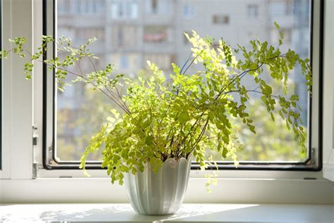 Plants For Apartments | best plants for apartment living ladyclever