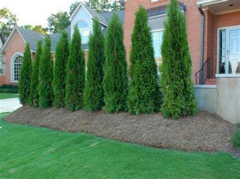 backyard bushes landscaping with evergreens ideas car interior design