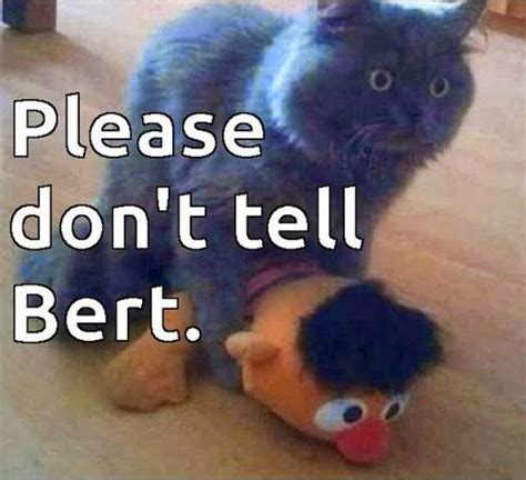 cat and memes great cats be 26 of the funniest cat memes and gifs