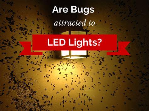 Do Led Lights Attract Bugs 1000bulbs Com Blog Do Led Light Bulbs Attract Bugs