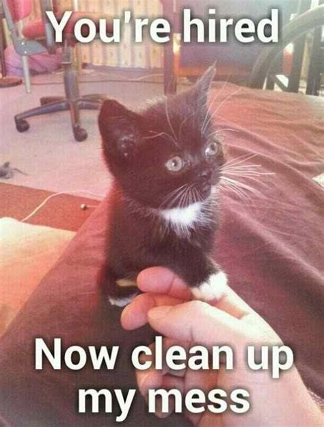 Clean Cat Memes - yup this funny cat is saying quot you are hired now clean up