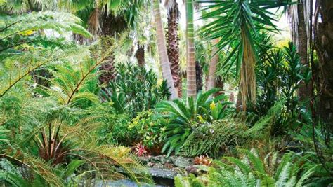 Tropical Decor by 8 Top Plants To Add Tropical Texture To A Nz Garden