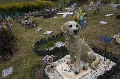 cementerio de animales piden la creaci 243 n de un cementerio para mascotas en la ciudad la verdad