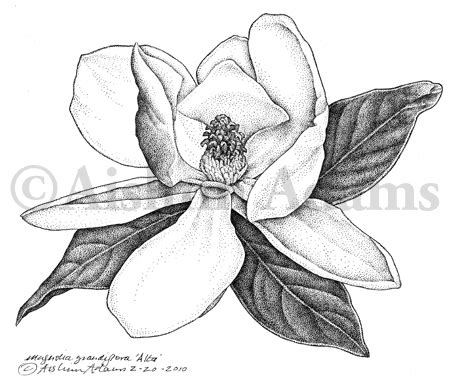 southern draw tattoo my and last botanical illustration aislinn