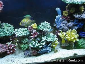 Saltwater Fish Marine Fish Only Coral Reef Aquarium Tank Artificial