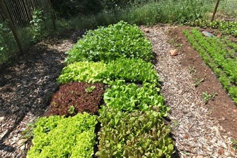 Intensive Vegetable Gardening What Crops Do You Plant Bio Intensively Peak Prosperity