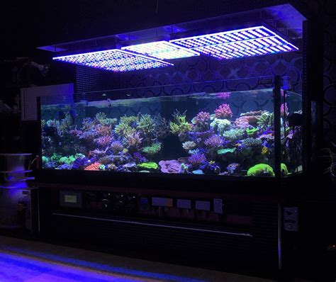 reef with lights aquarium led beleuchtung fotos reef und bepflanztes