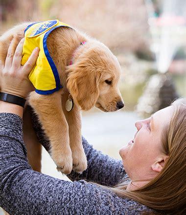 raising a puppy cci org homepage