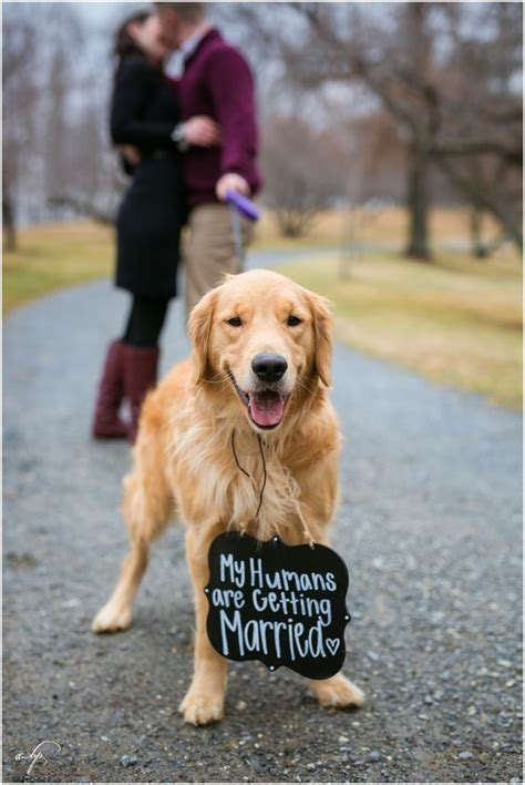 golden retriever photography winter engagement session golden retriever my humans are getting married