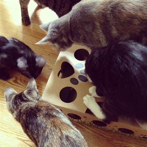 toys for boredom no boredom for cats cat amazing interactive puzzle treat maze