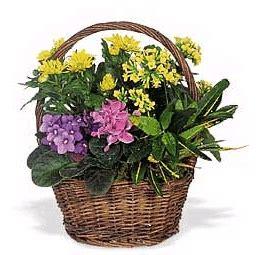 piante primaverili fiorite fiori a avellino consegna invio fiori a domicilio a