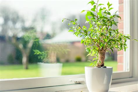 plants for conditions low light loving office plants indoor plant maintenance