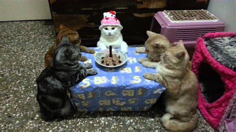 cat birthday birthday cat meowoof
