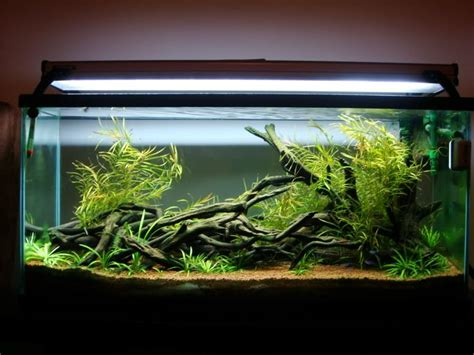 aquascaping african cichlid aquarium 17 best images about aquascaped tanks on pinterest