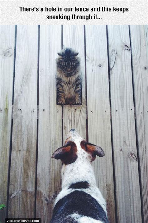 hole   fence   cat  sneaking