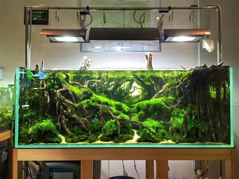 aquarium design com 13362 best aquascape images on pinterest