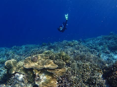 best snorkeling destinations 10 of the world s best snorkeling destinations la vie zine
