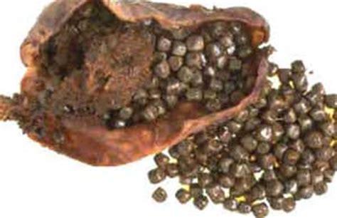 gallstones causes symptoms treatment gallstones