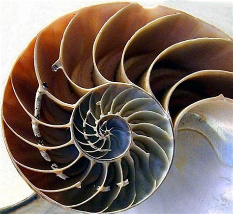 Golden Section In Nature by Doctor Disruption 187 Principles Of Design 37 Golden Ratio