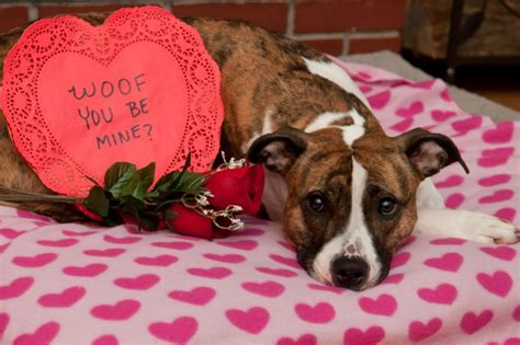 pet valentines americans will spend 681 million on pets this s day