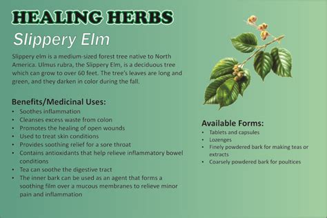 slippery elm for dogs slippery elm herbal remedy i used this poultice out of the powder form to